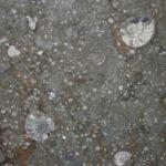 A polished Goniatid Limesone Plate