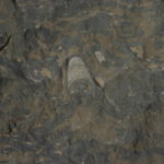 """Fossil Marble"" in the ground"