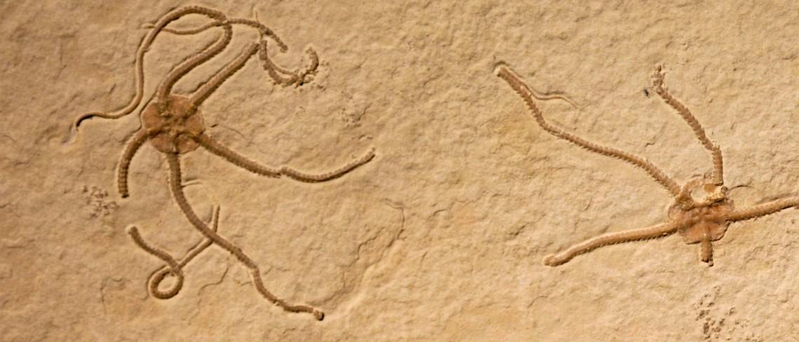 Sinosura kelheimense
