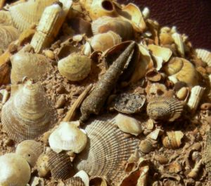 Fossils in the Sternberger