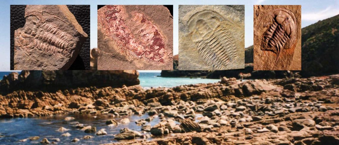 Fossils at Emu Bay Into